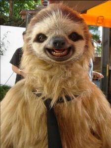 Sloth Digital Marketing
