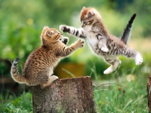 Everyone Loves Cats in Digital Marketing
