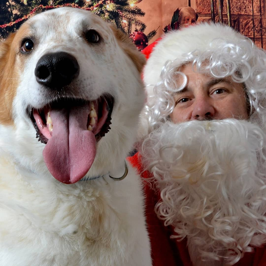 Has your dog been naughty or nice this year? Santa will be the judge.